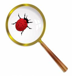 magnify ladybird vector image