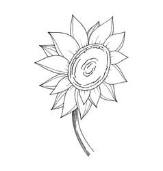 Sunflower floral botanical flower black vector