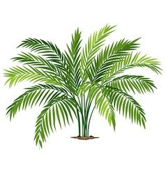 A chamaedorea plant vector