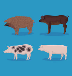 Set of pig cartoon vector