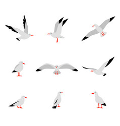 seabirds set of beautiful seagulls in a flat vector image