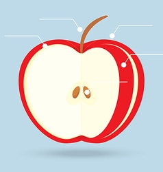 Apple slices structure diagram isolated vector