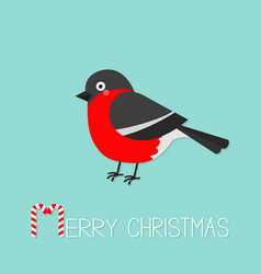 bullfinch winter red feather bird merry christmas vector image
