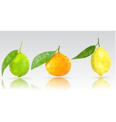 Fruits lime lemon clementine vector