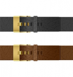leather belt vector image vector image