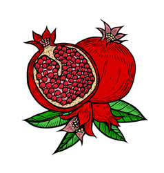 pomegranate fruit berry vector image vector image