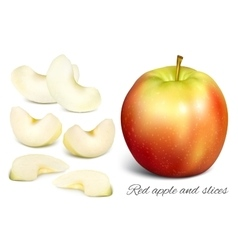 Apple and apple slices vector
