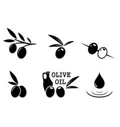 black olive set vector image