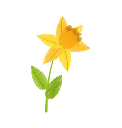 drawing daffodil flower spring floral vector image