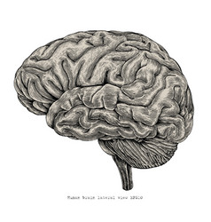Human brain lateral view hand drawing vintage vector