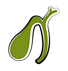 Isolated human gallbladder colored sketch vector