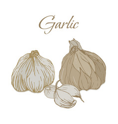 tasty veggies garlic vector image