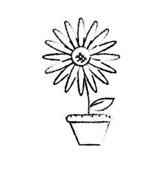 Figure beautiful sunflower in the flowerpot vector