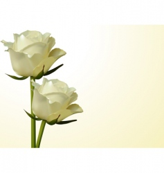 Ivory roses vector