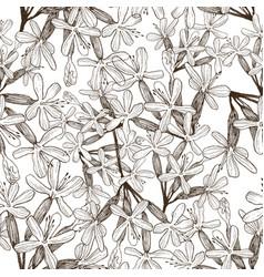 seamless pattern of wild herbal flowers vector image