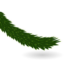 naturalistic colorful fir branch vector image