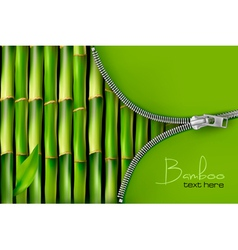 Bamboo background with open zipper vector