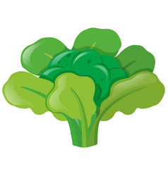 broccoli head with leaves vector image