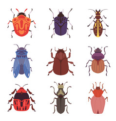 collection bugs and beetles various insects vector image