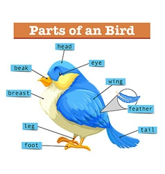 Different parts of little blue bird vector image