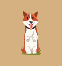 Joyful red-haired corgi standing on hind legs vector
