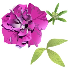 Photorealistic purple petunia vector image