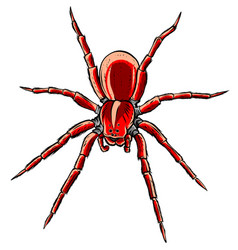 Red back spider and simple design vector