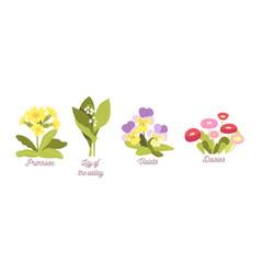 set spring flowers bloom garden or forest vector image