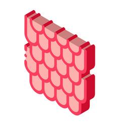 Shingles roisometric icon vector