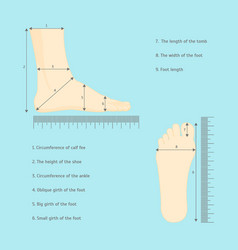 Square measure human feet shoe size vector