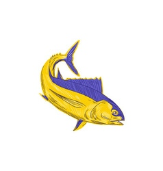 Albacore tuna fish drawing vector