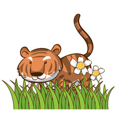 isolated picture cute tiger vector image