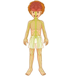 Little boy and nervous system vector