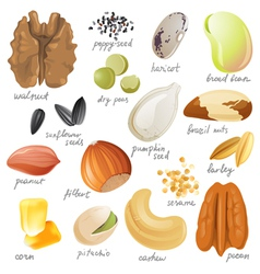Seeds nuts and beans vector