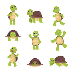 set of cute green turtles with brown shell in vector image