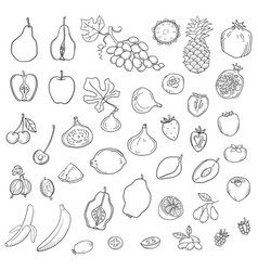set of stylized fresh cute fruits vector image vector image