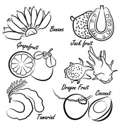 Thai fruit vector