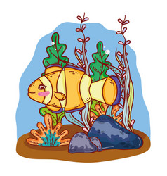 Clownfish tropical animal with seaweed plants vector