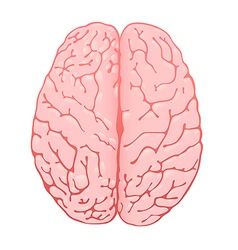 Pink brain a top view vector