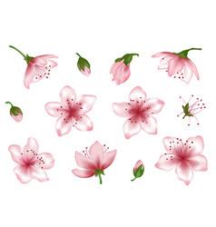 spring blossom pink flower set vector image