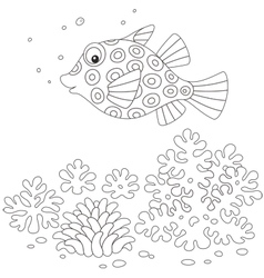 Boxfish vector