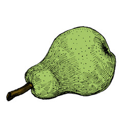 colorful engraving of a green pear vector image