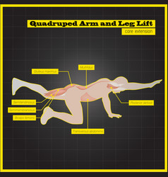 Antagonistic muscle exercises and workouts vector