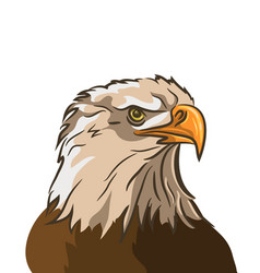 Eagle isolated on white background vector