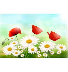 Nature background with summer flowers vector image vector image
