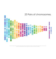 Chromosomes pairs structure dna genome set vector
