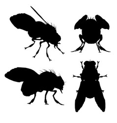 Set with silhouettes flies in different vector