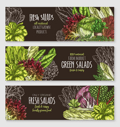Salads and leafy vegetables banners set vector