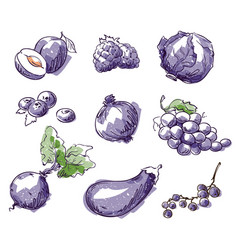 Assortment of purple foods fruit and vegtables vector