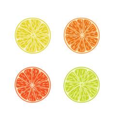 Citrus slices set orange lime lemon grapefruit vector